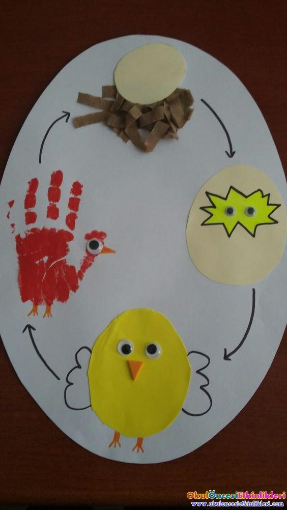 Yumurta Olusum Evreleri Okul Oncesi Etkinlikleri Hayallerinizi
